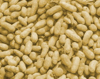 Photograph of Groundnuts-summer