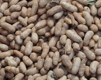Photograph of Groundnuts
