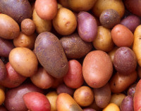 Photograph of Potatoes
